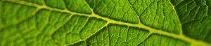 Notre motivation est une énergie naturelle renouvelable.